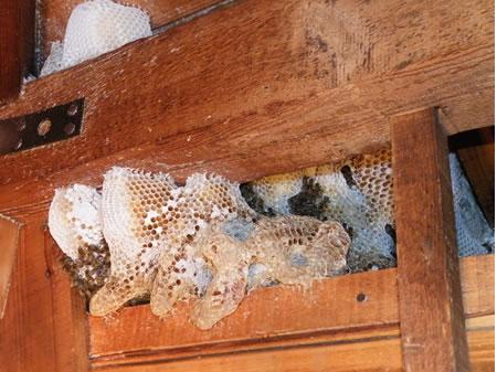 作業前の屋根裏の巣